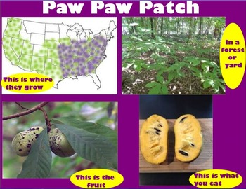 Paw Paw Patch (w/ dance and inst)~Smartboad~pattern~Cross Curricular