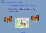 Grade 1 Lifecycle of a Butterfly