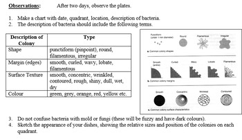Grade 10-11 Biodiversity- BACTERIA (teacher notes, lesson, worksheet, lab)