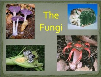 Grade 10-11 Biodiversity- FUNGI Lesson and LAB!
