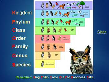 Grade 10-11 Biodiversity Unit- Taxonomy and Dichotomous Key