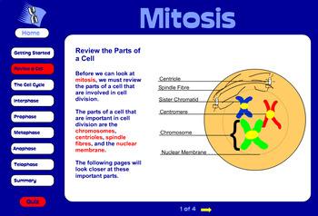 Grade 10 & 11 Mitosis FULL lesson plan!