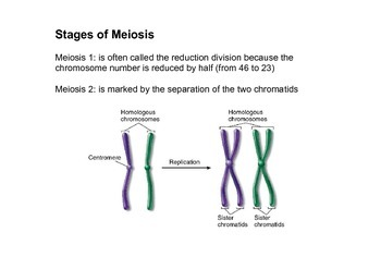 Grade 11 Biology Reproduction (Mitosis and Meiosis) Notes