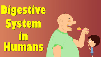 Grade 11 and 12 Animal Structure and Function- Digestive Systems !