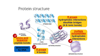 Grade 11 and 12 Animal Structure and Function- Proteins !
