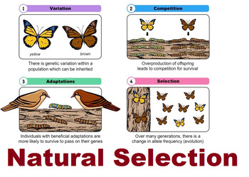 Grade 11 and 12 Darwin's Theory- Natural Selection Lesson Plan!