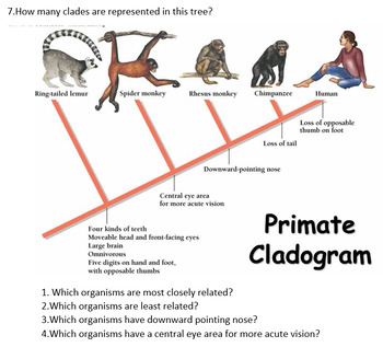 grade 11 and 12 evolution unit phylogenetic trees and cladograms. Black Bedroom Furniture Sets. Home Design Ideas