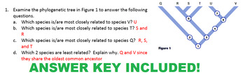 Grade 11 and 12 Evolution Unit- Phylogenetic Trees and Cladograms