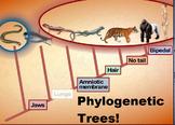 High School Biology- Evolution Unit- Phylogenetic Trees an