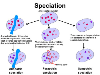 Grade 11 and 12 Evolution Unit- Speciation Power Point!