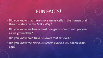 Grade 11 and 12 Homeostasis Lesson- The Nervous System