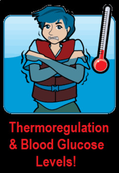 Grade 11 and 12 Homeostasis Lesson- Thermoregulation and Blood Glucose Levels!