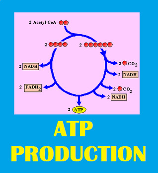 Grade 11 and 12 Metabolic Processes QUIZ! (Gibbs, ATP Hydrolase)