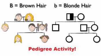 Grade 11 and 12 Pedigree Activity!