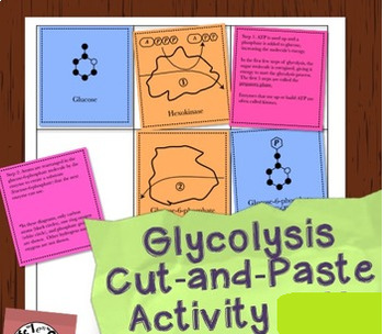 Grade 11 or 12 Biology Aerobic Respiration Cut and Paste Activity!