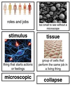 Grade 2: Domain 10: The Human Body Common Core Vocabulary Image Cards