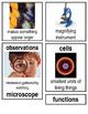 Grade 2: Domain 10: The Human Body Common Core Vocabulary