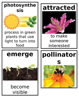 Grade 2: Domain 6: Cycles in Nature Common Core Vocabulary Image Cards
