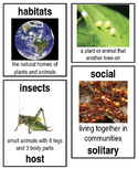Grade 2: Domain 8: Insects Common Core Vocabulary Image Cards