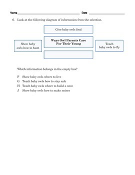 Grade 3 Common Core Reading: Informational Text about Owls
