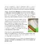 Grade 3 Language - Curriculum-Based Checklist
