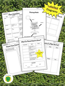 Grade 3: Science BUNDLE: Plants, Structures & Forces