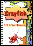 Crayfish Plants and Animals - 3rd Grade Science