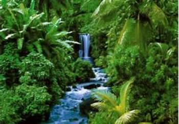 Grade 5 Module 2A Rainforests Unit 3