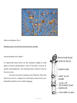 Grade 5 Social Science Random on Vegetations, Civilizations and Solar System
