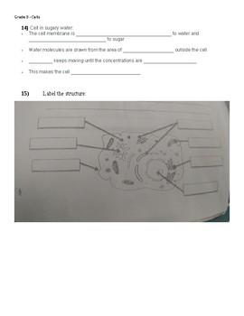 Grade 8 Quiz - Understanding Life Systems (Cells).