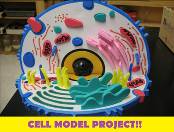 Grade 8 and 9 Cell Model Project