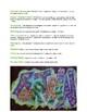 Graffiti Name Design Visual Arts Lesson for 5th to 12th Grades