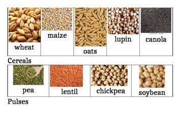 Food Grains Price List In India