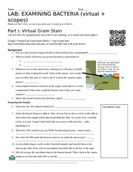Gram Stain Virtual + Physical Lab