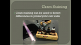 Gram Staining Bacteria Animation