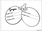 Grapes - 5 Senses Publishing