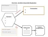 Graphic Organizer:  Cell Respiration (Aerobic & Anaerobic Respiration)
