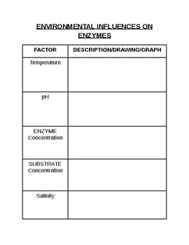 Graphic Organizer: Factors influencing Enzymes