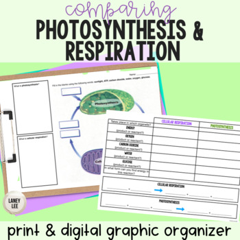 Photosynthesis and Respiration - Graphic Organizer
