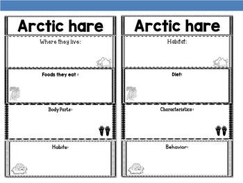 Graphic Organizer : Arctic Hares  - Polar and Arctic Animals