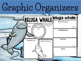 Graphic Organizers: Beluga Whales - Polar and Arctic Animals