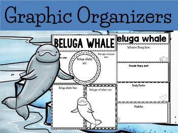 Graphic Organizers Bundle : Beluga Whales - Polar and Arctic Animals
