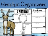 Graphic Organizers Bundle :  Caribou  - Polar and Arctic Animals