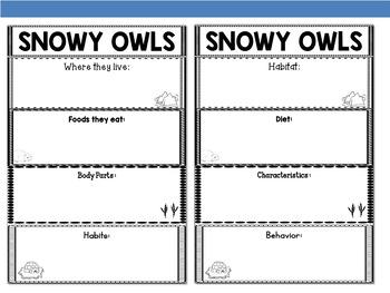 Graphic Organizers Bundle :  Snowy Owls  - Polar and Arctic Animals