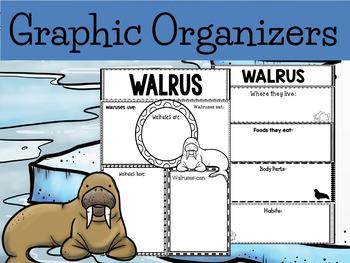 Graphic Organizer Bundle :  Walrus  - Polar and Arctic Animals