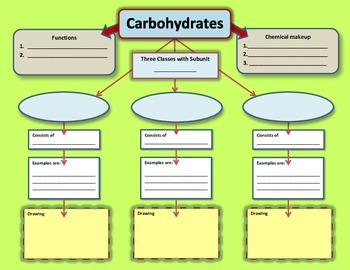 Carbohydrates Worksheets & Teaching Resources | Teachers Pay Teachers