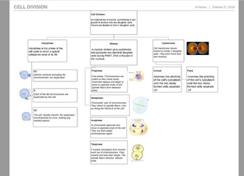 Graphic Organizer for Cell Division