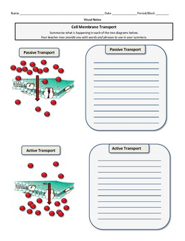 Graphic Organizer for Cell Transport Systems
