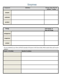 Graphic Organizer for Enzymes
