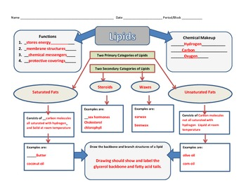 Graphic Organizer for Lipids